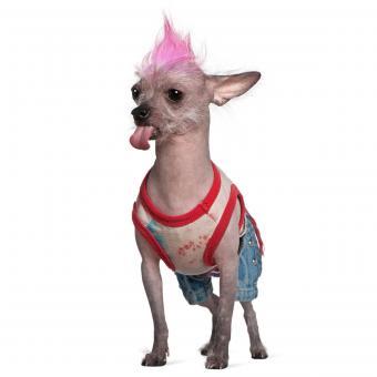 https://cf.ltkcdn.net/dogs/images/slide/234818-850x850-5-Funny_looking_dog.jpg