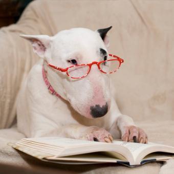 https://cf.ltkcdn.net/dogs/images/slide/234819-850x850-6-Funny_looking_dog.jpg