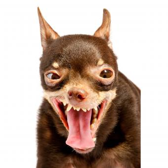 https://cf.ltkcdn.net/dogs/images/slide/234820-850x850-7-Funny_looking_dog.jpg