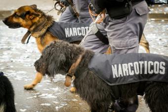True Canine Heroes