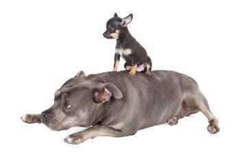 Big dog Little puppy