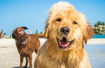Southern-Inspired Dog Names