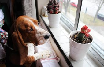 Dog By Potted Cactuses