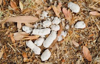 What Causes White Dog Poo?