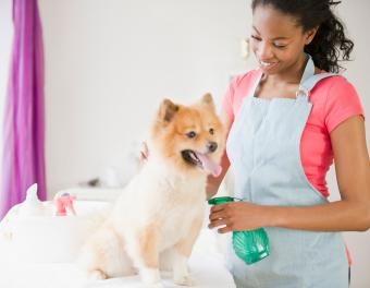 Spraying dog with olive oil mixture