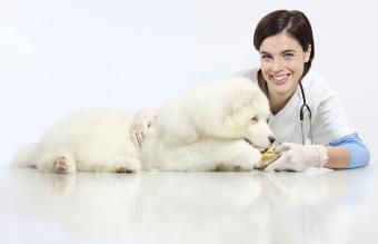 Canine Pancreatitis Diet