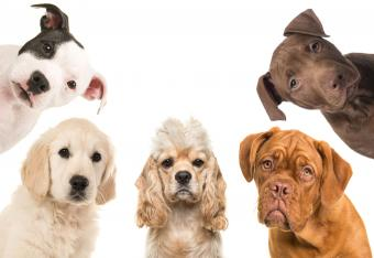 five puppies looking down at camera