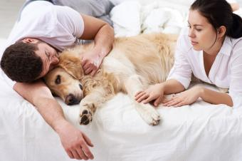 Man and woman with dying dog