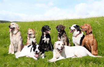 group of mixed breed dogs