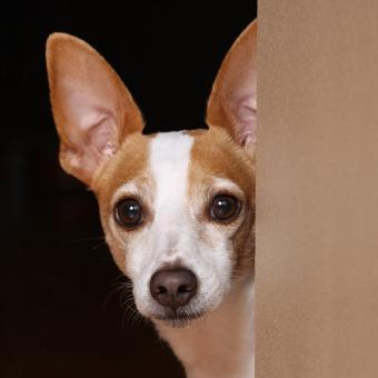 https://cf.ltkcdn.net/dogs/images/slide/238749-850x850-Ratty-1.jpg