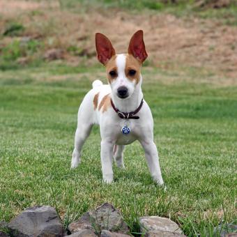 https://cf.ltkcdn.net/dogs/images/slide/238751-850x850-Ratty-3.jpg
