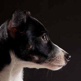 https://cf.ltkcdn.net/dogs/images/slide/238753-850x850-Ratty-6.jpg