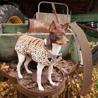 https://cf.ltkcdn.net/dogs/images/slide/238757-850x850-rat-terrier-personality.jpg