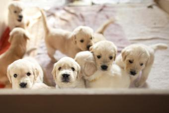 Puppy siblings