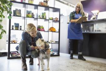 Woman saying goodbye to schnauzer at dog daycare