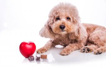 Risks of Giving Heartworm Pills Without a Prescription