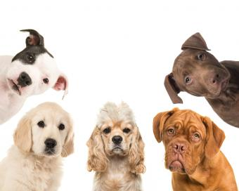 150 Traditional Puppy Names