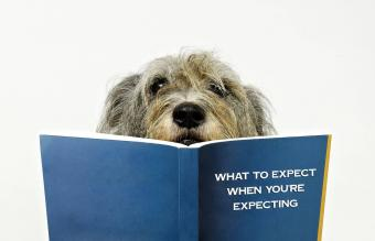 dog reading baby book