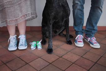 Baby shoes with dog paws