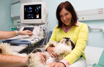 Dog having ultrasound exam