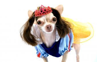 Snow white dog