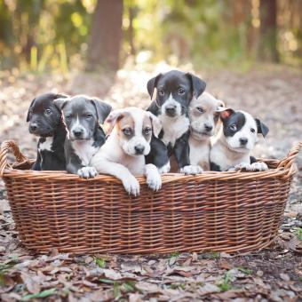 https://cf.ltkcdn.net/dogs/images/slide/243135-850x850-8-pit-bull-puppy-pictures.jpg