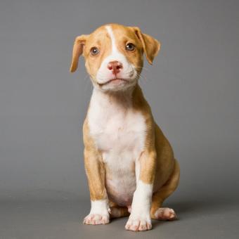 https://cf.ltkcdn.net/dogs/images/slide/243136-850x849-9-pit-bull-puppy-pictures.jpg