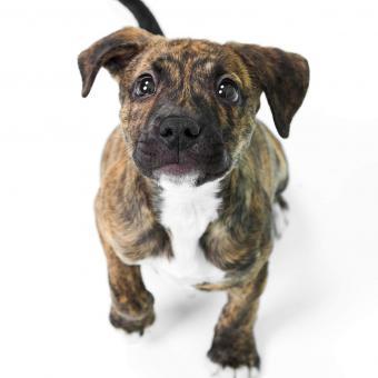 https://cf.ltkcdn.net/dogs/images/slide/243142-850x850-4-pit-bull-puppy-pictures.jpg