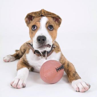 https://cf.ltkcdn.net/dogs/images/slide/243144-850x850-6-pit-bull-puppy-pictures.jpg