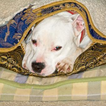 https://cf.ltkcdn.net/dogs/images/slide/243146-850x850-3-pit-bull-puppy-pictures.jpg