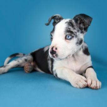 https://cf.ltkcdn.net/dogs/images/slide/243555-850x850-10-great-dane-puppy.jpg