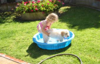 Girl and her dog playing in a pool
