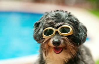 Ten Reasons to Buy Your Dog a Wading Pool