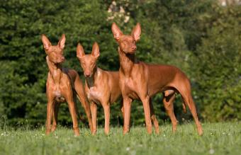 37 Types of Hound Dogs