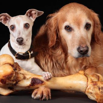 https://cf.ltkcdn.net/dogs/images/slide/244109-850x850-4-miniature-greyhound.jpg