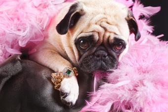 Dog and Puppy Designer Luxury Clothes and Collars