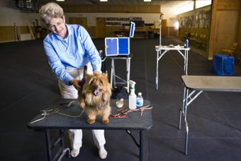 List of Dog Show Supplies and Sources
