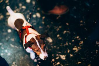 https://cf.ltkcdn.net/dogs/images/slide/245547-850x566-smooth-fox-terrier-jumping.jpg