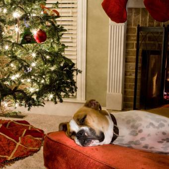 https://cf.ltkcdn.net/dogs/images/slide/245713-850x850-5-christmas-dog-pictures.jpg