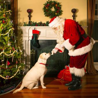 https://cf.ltkcdn.net/dogs/images/slide/245714-850x850-6-christmas-dog-pictures.jpg