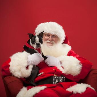 https://cf.ltkcdn.net/dogs/images/slide/245715-850x850-7-christmas-dog-pictures.jpg