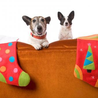https://cf.ltkcdn.net/dogs/images/slide/245717-850x850-9-christmas-dog-pictures.jpg