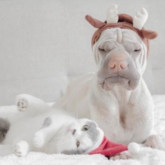 https://cf.ltkcdn.net/dogs/images/slide/245719-850x850-11-christmas-dog-pictures.jpg