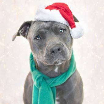 https://cf.ltkcdn.net/dogs/images/slide/245722-850x850-14-christmas-dog-pictures.jpg