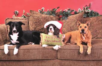 Christmas Dog Pictures