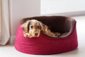 Choosing the Right Type of Dog Bed for Your Pet