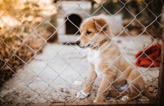 A dog behind a kennel fence