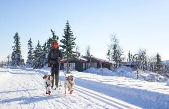 Cross-country skiing with dogs in the mountains