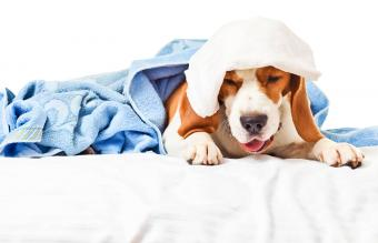 How Long Does Kennel Cough Last?