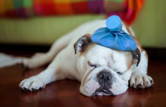 Signs Your Dog Might Be Sick